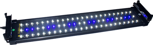 Ultra-bright White and Blue LED Lights
