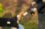 Dog Training compressed _DSC9686.jpg
