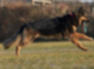 Dog Training compressed _DSC9409.jpg