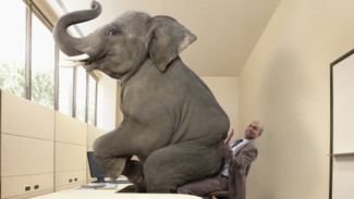 Do we have an elephant in our brains?