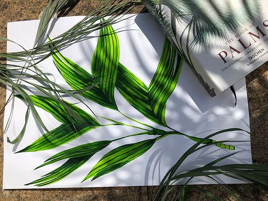 palm painting.jpg