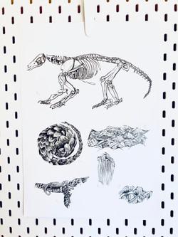 Tonal scientific Pangolin pencil drawing