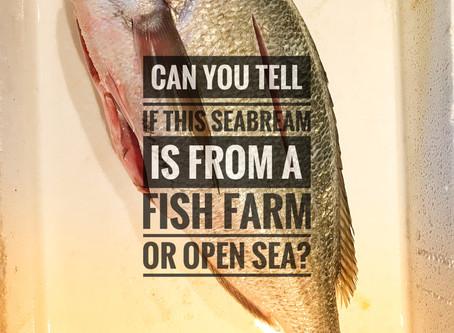Distinguish wild gilt-head sea bream from farmed