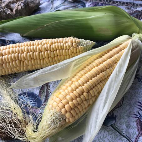 Easy Snack: Corn on the Cob