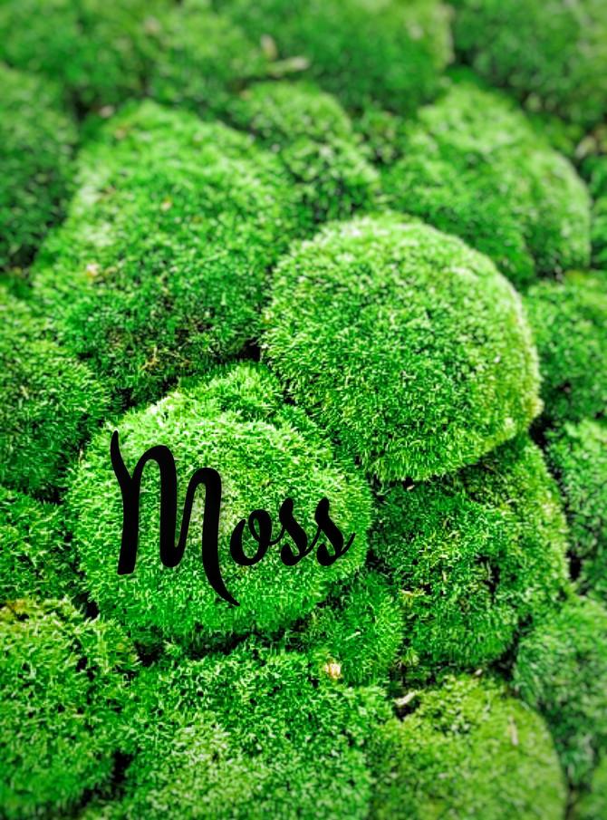 Moss - mechová Ostrava
