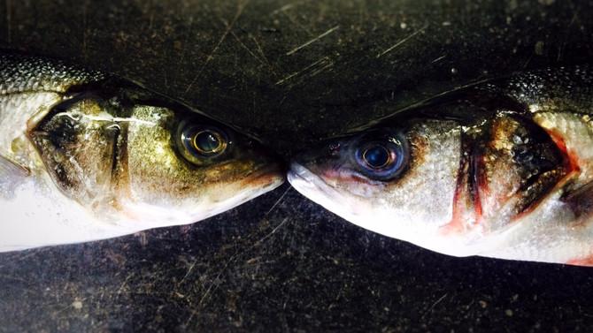Rohlíkův svět ryb