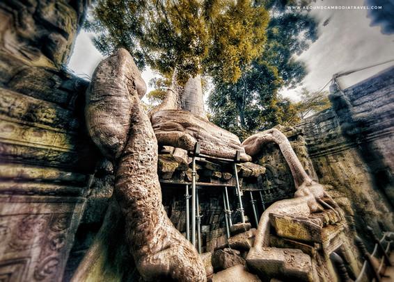 Tree at Ta Prom Temple