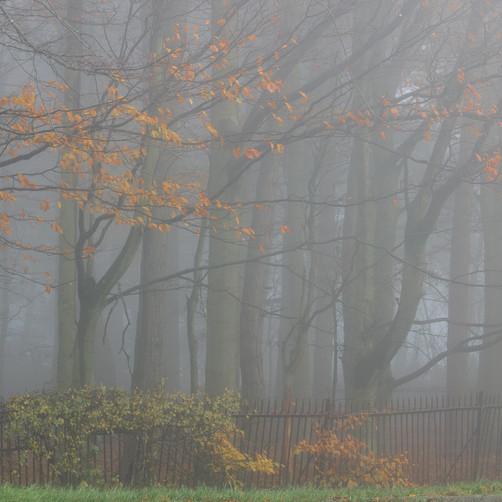 Railings and mist