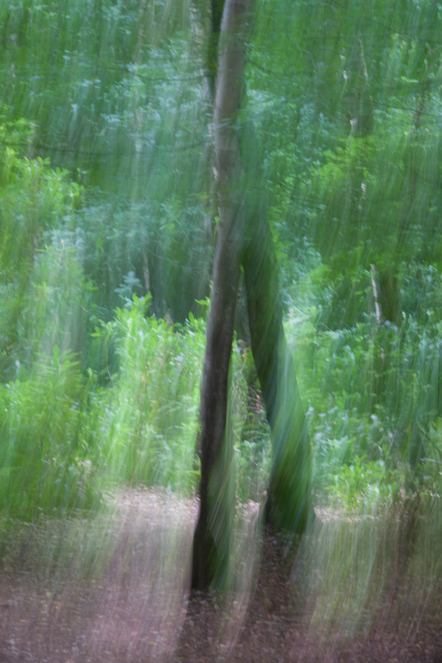 Crossing trees