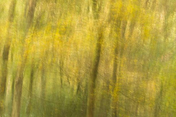 Autumn yellow