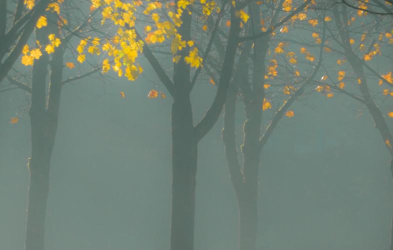 Glowing leaves