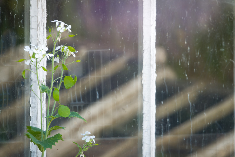 White flower at  the window