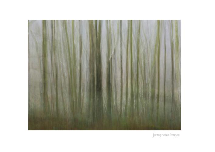 Lea Wood 002