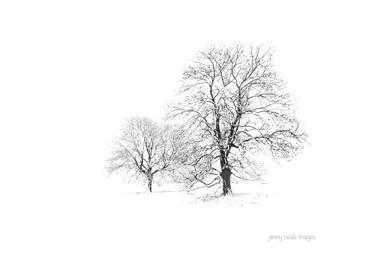 Winter Trees 001