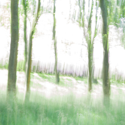 Trees and light