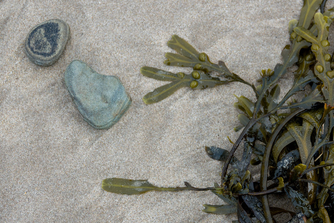 Stones with seaweed