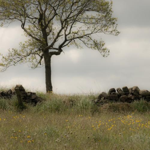 Tree and wall