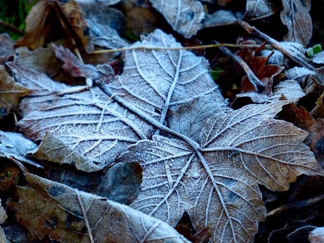 Icing sugar leaves