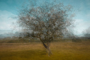 Longshaw Tree.jpg