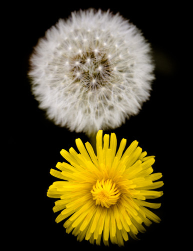 Flower to seeds