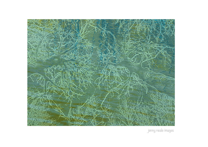 Abstract trees and water