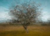 Longshaw Tree
