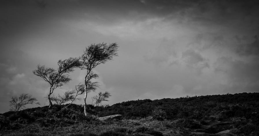 Windswept on Owler Tor