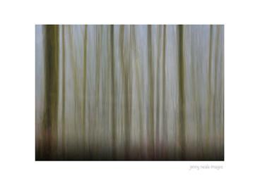 Lea Wood Trees 001