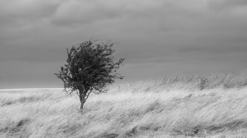 Gratton Dale Tree