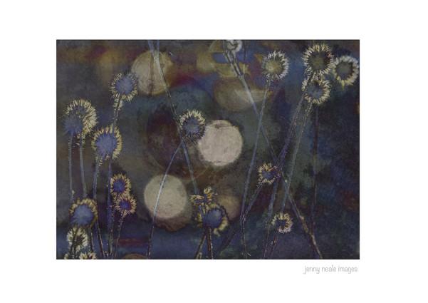 Abstract Seedheads