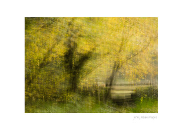 Yellow Leaves 002