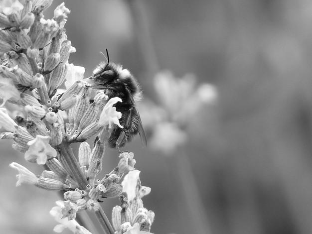 Bee profile