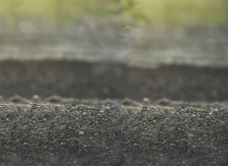 seedlings website masthead_r1_right