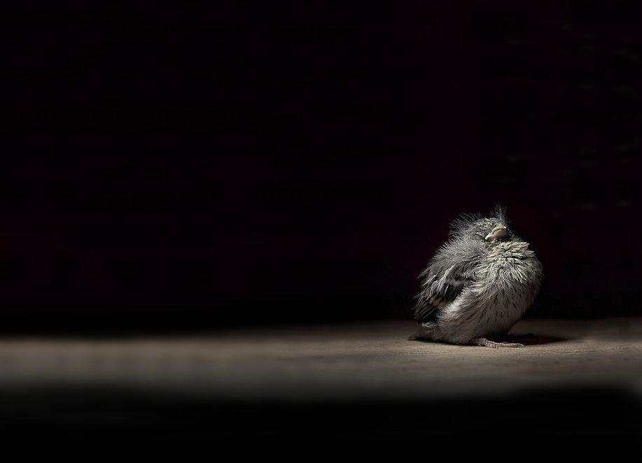 Book Jacket Bird Background.jpg
