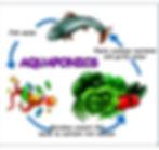 091318 - Aquaponics Lesson copy.jpg
