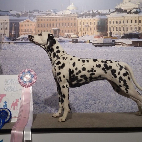Millie is now Helsinki Junior Winner 2015!