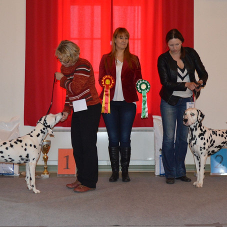 Finnish Dalmatian Puppy and Open Show 28.3.2016