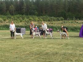 Finnish Dalmatian Specialty Show 2018 BOB breed breeder 1