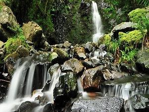 cascade-bruscher-sentier-botanique-203-7