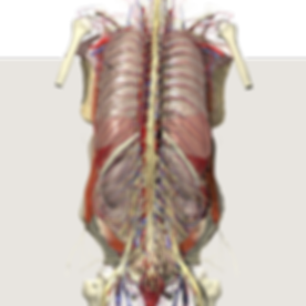 Anatomy%20for%20Web%20page%20%231_edited