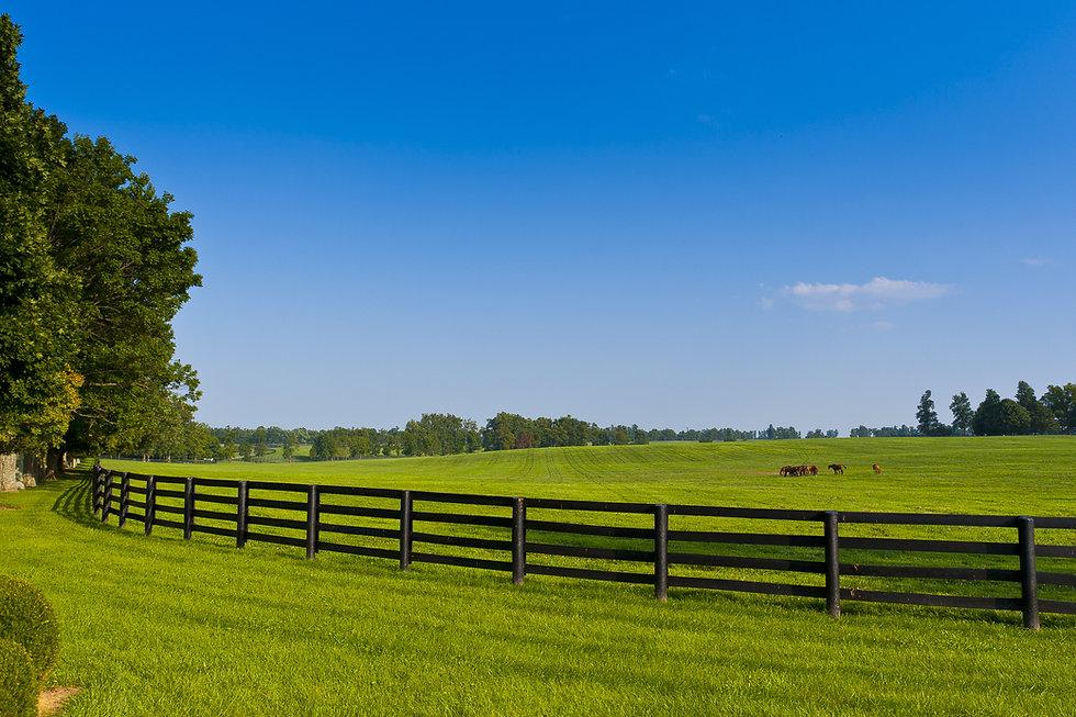 Country Scenery.jpg