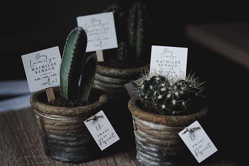 Mini-cactus - retrait proche Mont de Marsan ou livraison Bordeaux