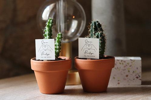Coup de coeur : Mini-cactus ( Pas d'envoi possible ) retrait proche Mont de Mars