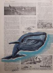 """""""Baleine 1"""" Labarussias"""