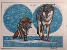 """Couple de loups"" Labarussias"