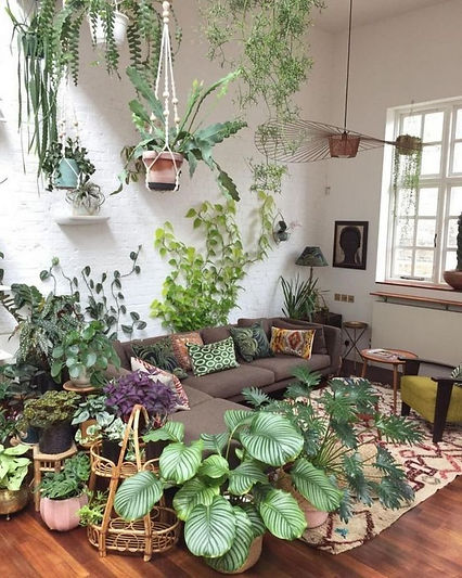 Houseplant Care 101_ The Ultimate Guide