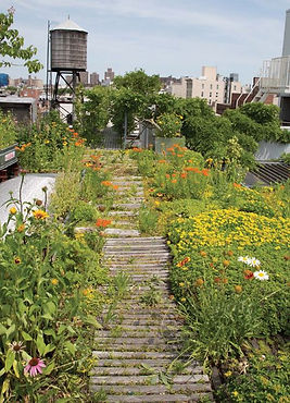 The How-to's of Rooftop Farming in %22Th