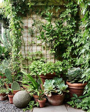 Plant _ Life_ A Tiny Brunswick Garden -