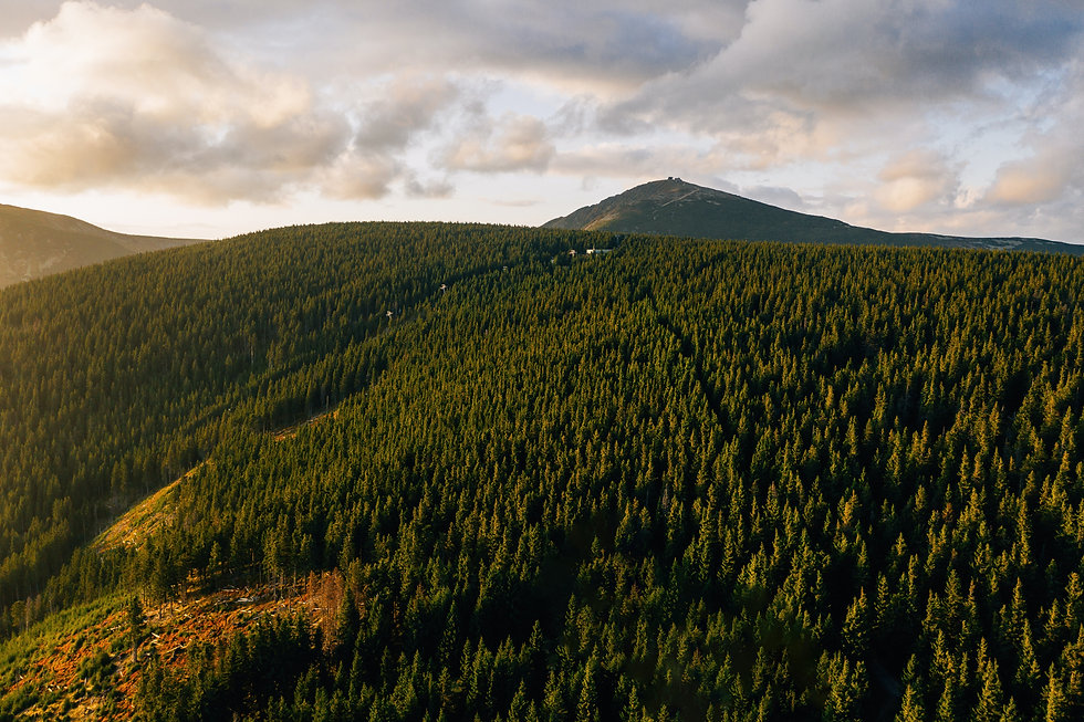 aerial-photo-of-forest-across-mountain-3