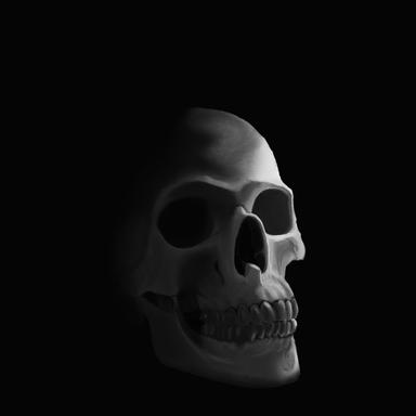 Skull - Value Study
